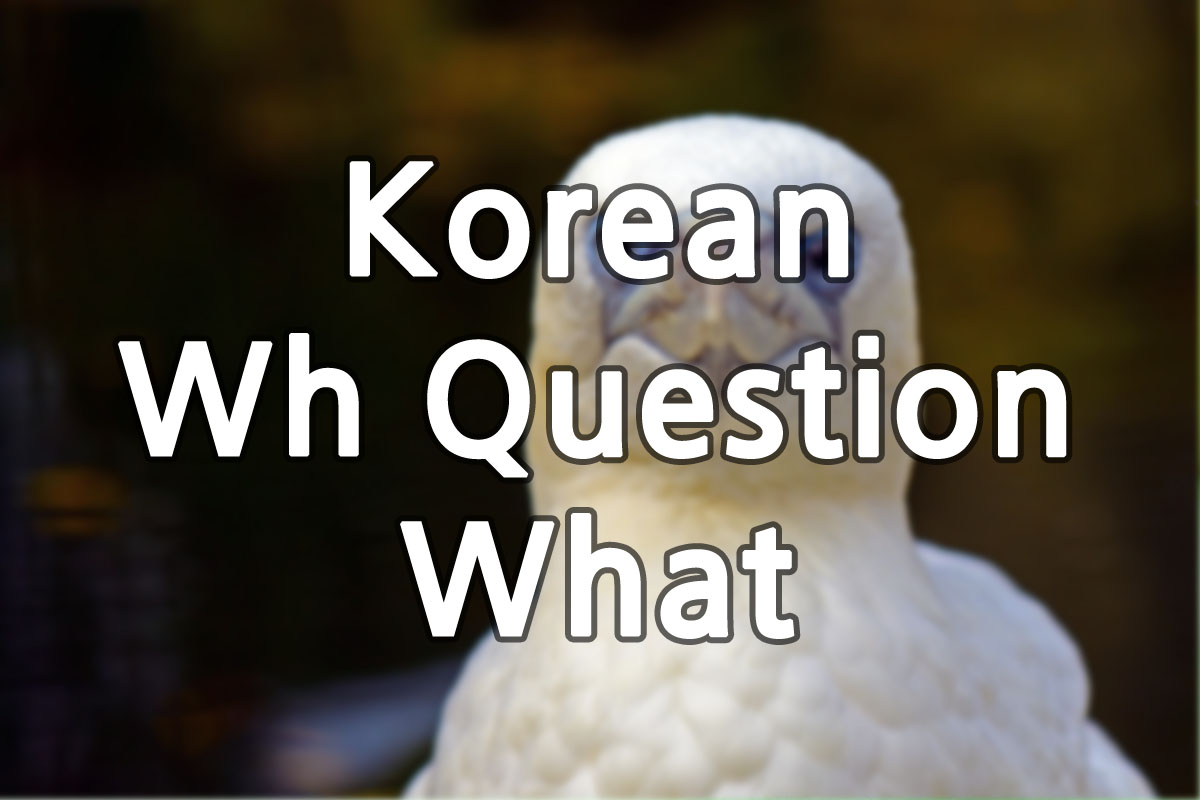 Korean What Questions img