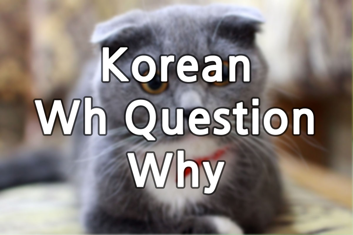 Korean Why Questions img