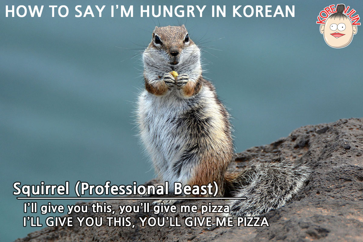 How To Say I'm Hungry in Korean img