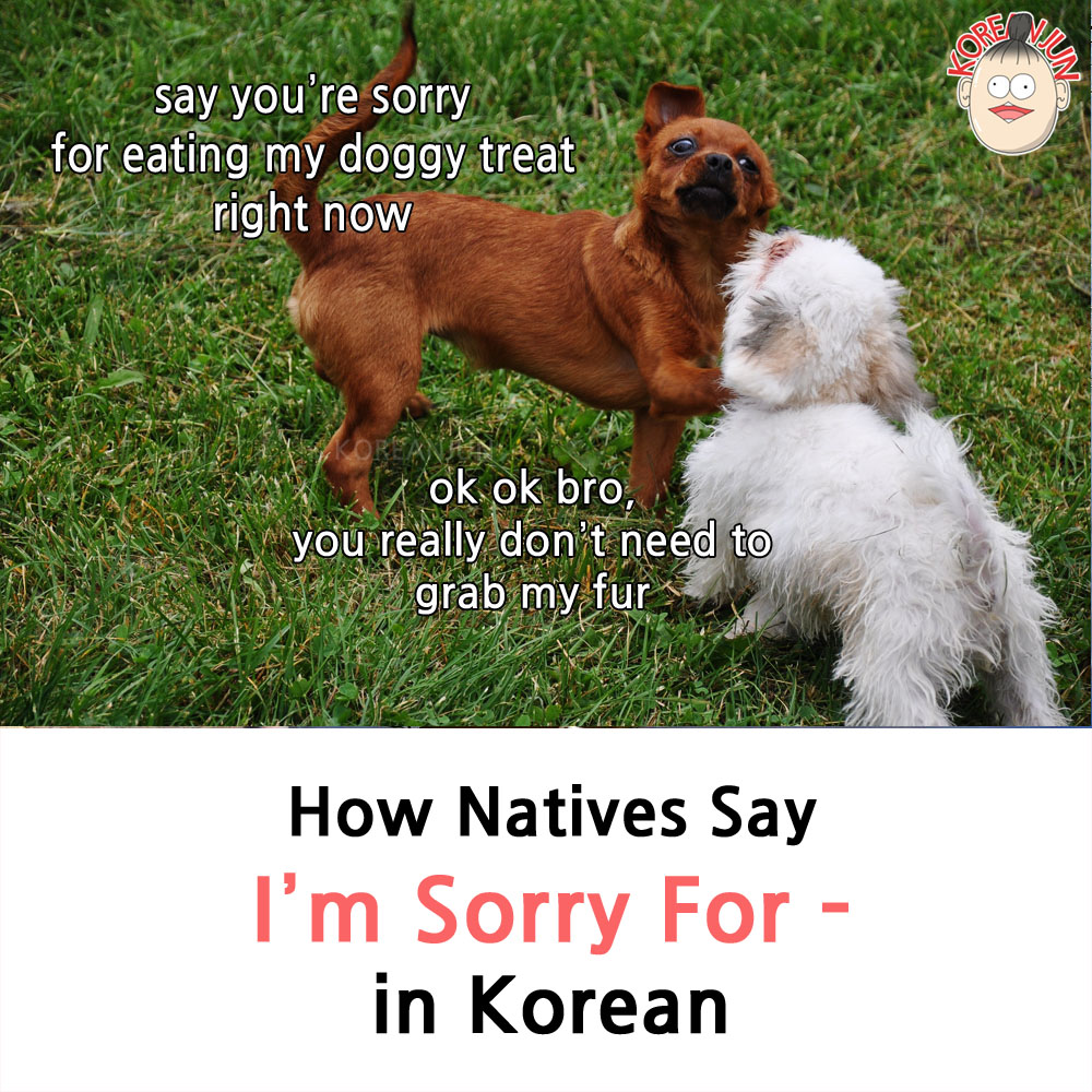 I'm Sorry For in Korean 1