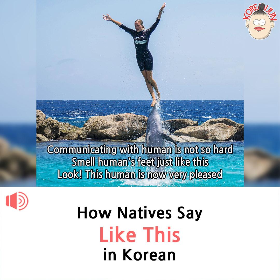 Like This in Korean 1